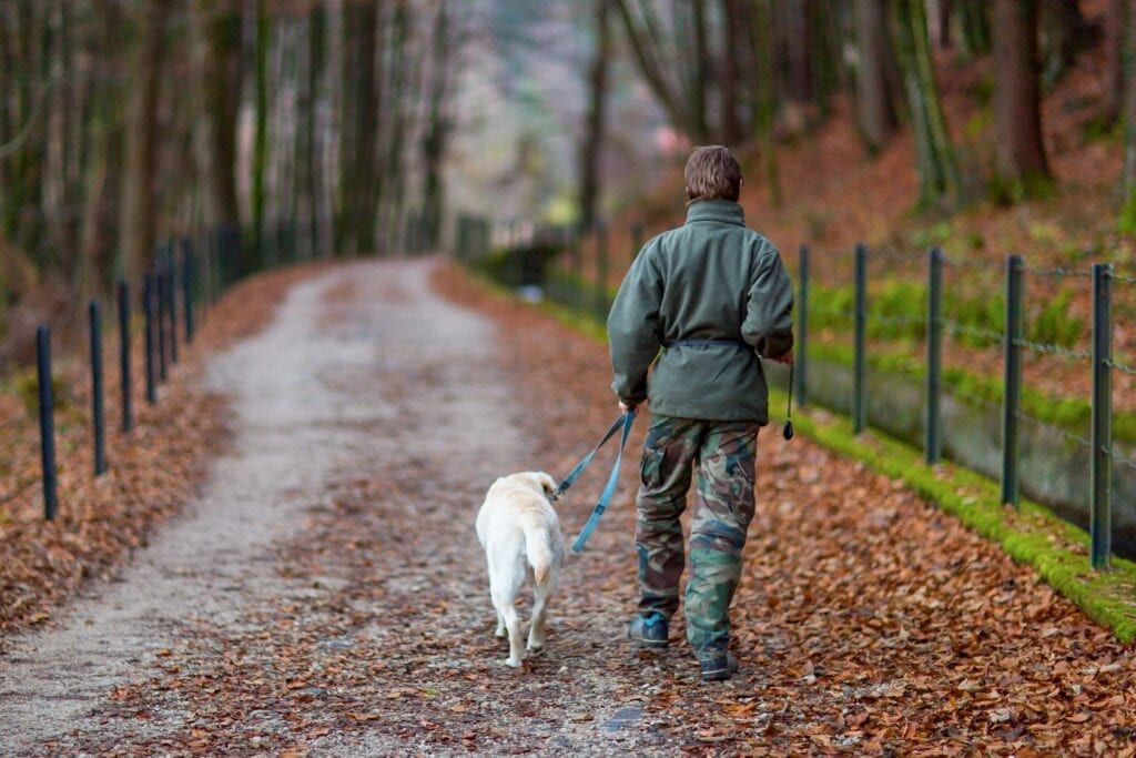woman and dog walking down a quiet country road with trees